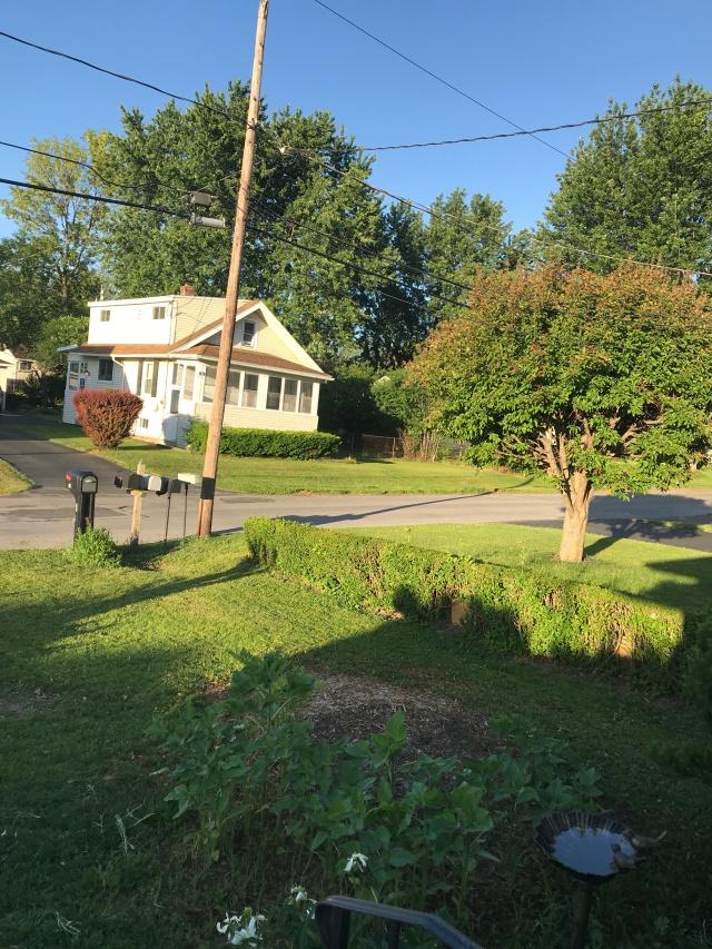 Donna's Yard